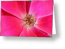 Flat Rose Hot Greeting Card