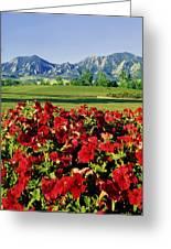 210546-v-flatirons And Flowers V  Greeting Card