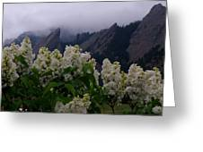 Flatirons White Lilacs Greeting Card