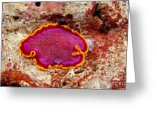 Flatworm Greeting Card