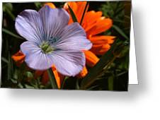 Flax And Aster Greeting Card