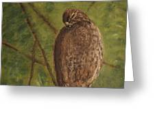Fledged Red-shouldered Hawk Greeting Card