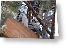 Fledgling Owlets 2011  Greeting Card