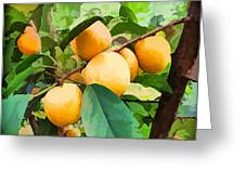 Fleshy Yellow Plums On The Branch Greeting Card