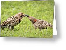 Flicker Feeding Greeting Card