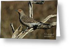 Flicker On Cedar Greeting Card