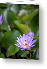 Flight Of The Bee  II Greeting Card by Jon Glaser