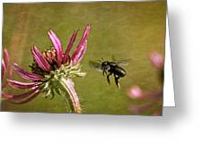 Flight Of The Mason Bee Greeting Card