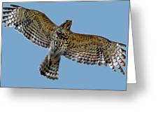 Flight Of The Red Shouldered Hawk Greeting Card
