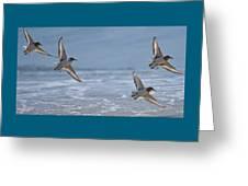 Flight Of The Sanderlings Greeting Card