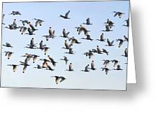 Flight Of The White Ibis Greeting Card