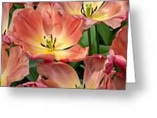 Flighty Tulips Greeting Card