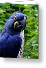 Flirty Birdy Greeting Card