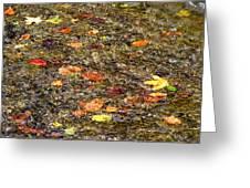Floaties Greeting Card