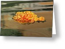 Floating Beauty - Hot Orange Chrysanthemum Blossom In A Silky Fountain Greeting Card