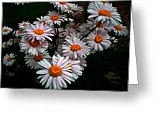 Floating Daisies Greeting Card