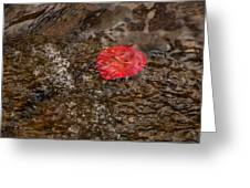 Floating Downstream Greeting Card