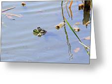 Floating Frog Greeting Card