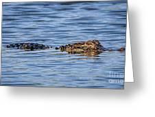 Floating Gator Greeting Card