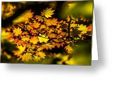 Floating Leaves Greeting Card by Claudia Abbott