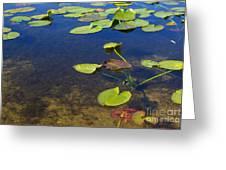 Floating Leaves Greeting Card