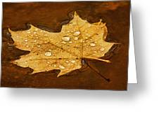 Floating Maple Leaf Txt Greeting Card