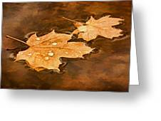 Floating Maple Leaves Pnt Greeting Card