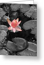 Floating Pink Greeting Card
