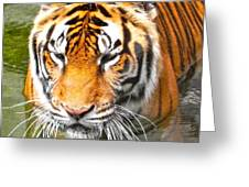 Floating Tiger Greeting Card