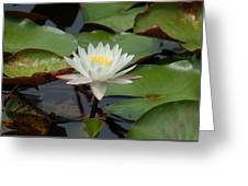 Floating Water Lilly Greeting Card