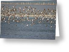 Flock Of Birds In Flight  Greeting Card