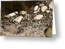 Flock Of Butterflies Panarama Greeting Card