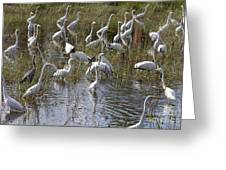 Flock Of Different Types Of Wading Birds Greeting Card