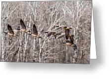 Flock Of Geese Greeting Card