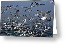 Flock Of Seagulls In The Sea And In Flight Greeting Card