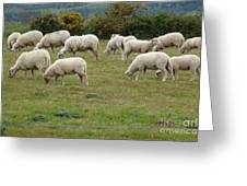 Flock Of Sheeps Greeting Card