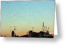 Flock Of Swallows Flying Over Rooftops At Sunset During Fall Greeting Card