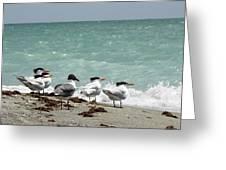 Flock Of Terns Gp Greeting Card