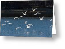 Flock Of Them Greeting Card