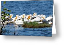 Flock Of White Pelicans Greeting Card