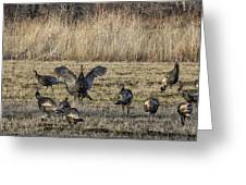 Flock Of Wild Turkeys Greeting Card
