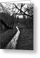Flooded Trail Greeting Card