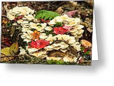 Floor Of The Forest In Fall Greeting Card