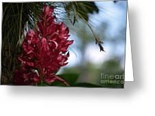 Flor De Fuego Greeting Card