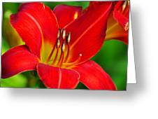 Flora 1 Greeting Card