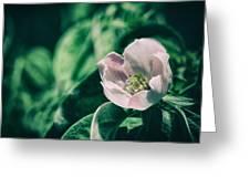 Flora 2821 Greeting Card