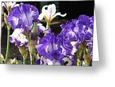 Flora Bota Irises Purple White Iris Flowers 29 Iris Art Prints Baslee Troutman Greeting Card