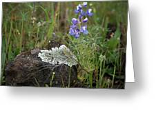Flora On The Plateau Greeting Card