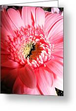 Floral 41 Greeting Card