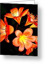 Floral 6019 Greeting Card
